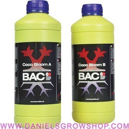Coco Bac Bloom A+B