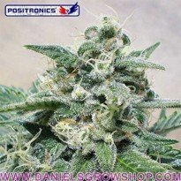 Super Cheese (Positronics)