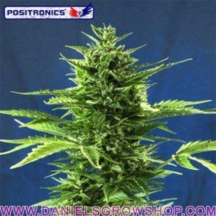 Jack Diesel Express (Positronics)