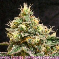 Confidential Cheese (Reserva Privada)