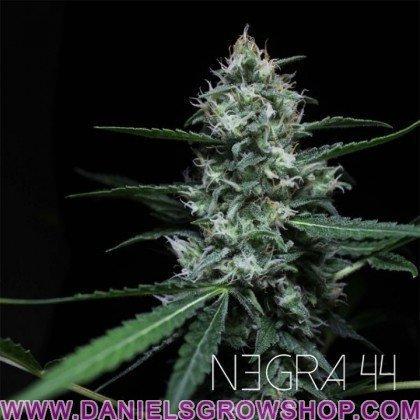 Negra 44 (RKiem)
