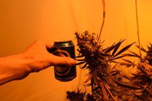 marihuana-0755