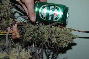 marihuana-0857