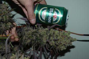 marihuana-0858