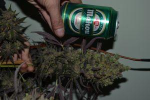 marihuana-0859